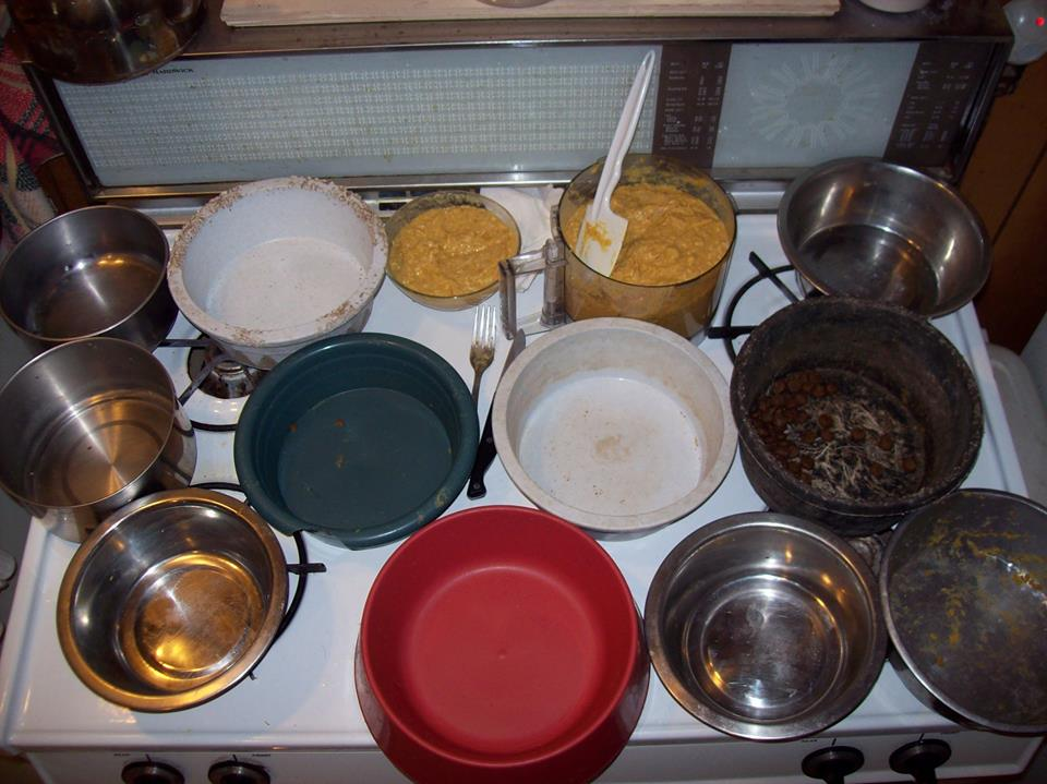 Dot's Old Dogs Home making homemade food