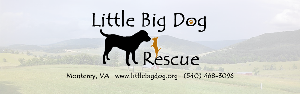 Little Big Dog Rescue Banner