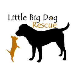 little big dog rescue logo Monterey Virginia