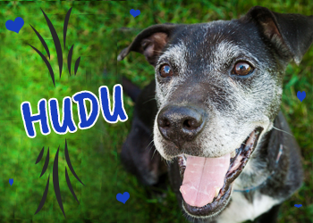 Hudu is available for adoption
